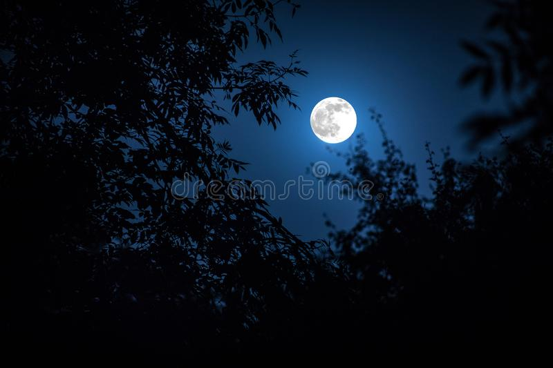 Night landscape of sky and super moon with bright moonlight behind silhouette of tree branch. Serenity nature background. Outdoors royalty free stock photography