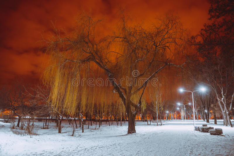 Night landscape in winter city. Park with lights stock image