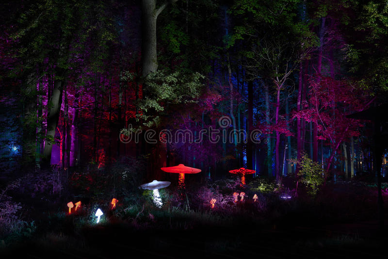 Night lights show `Inspiration` in Ostankino garden city park. Hundreds of lights in the forest. Amazing 3d light and laser illumi stock photos