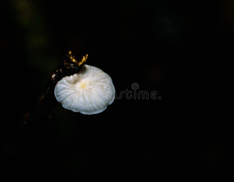 Night macro photography royalty free stock photo