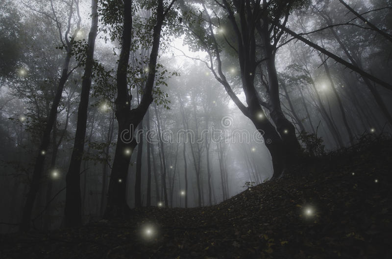 Night in magic enchanted fairy tale forest royalty free stock photo