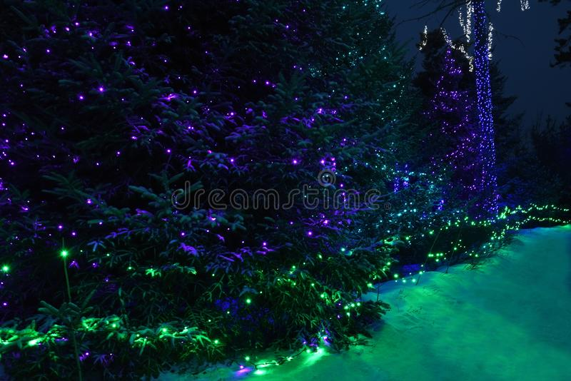 Night photo. Decorated with colored lights and garlands snow-covered garden.Coniferous fir trees in the glowing lights. The atmosphere of winter holidays and stock photography