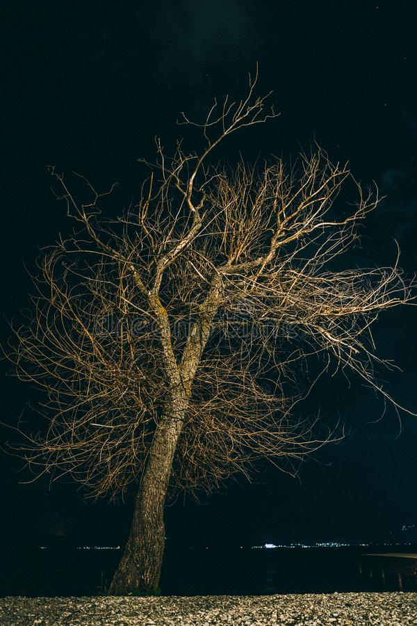 Night photo of a leafless tree with stunning branches stock photography