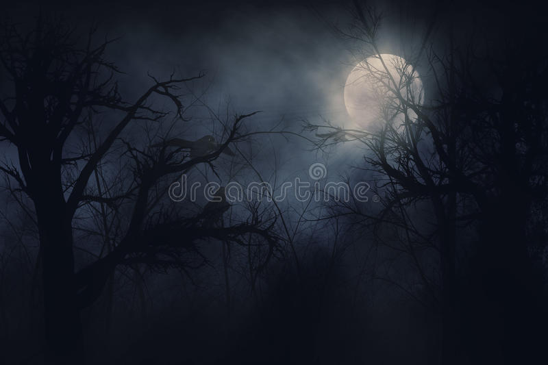 Download Night ravens stock illustration. Image of outdoors, midnight - 25814999