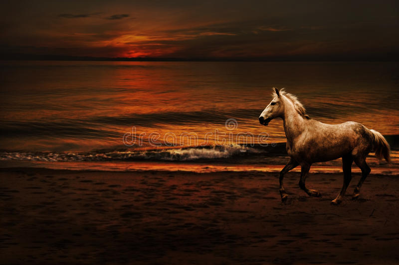 Night romantic landscape with a horse stock image