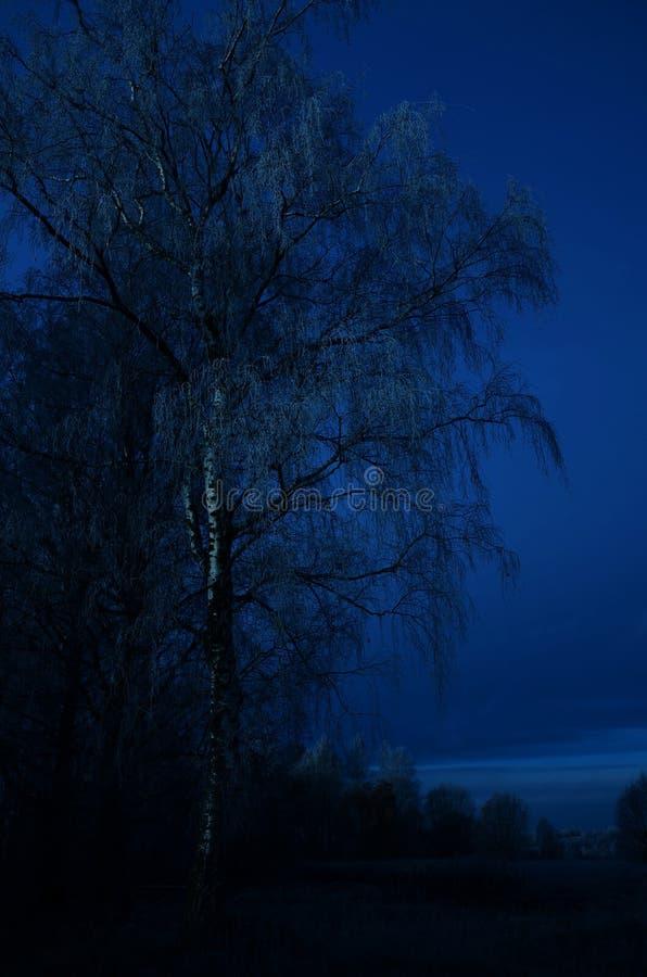 Night rural landscape stock image