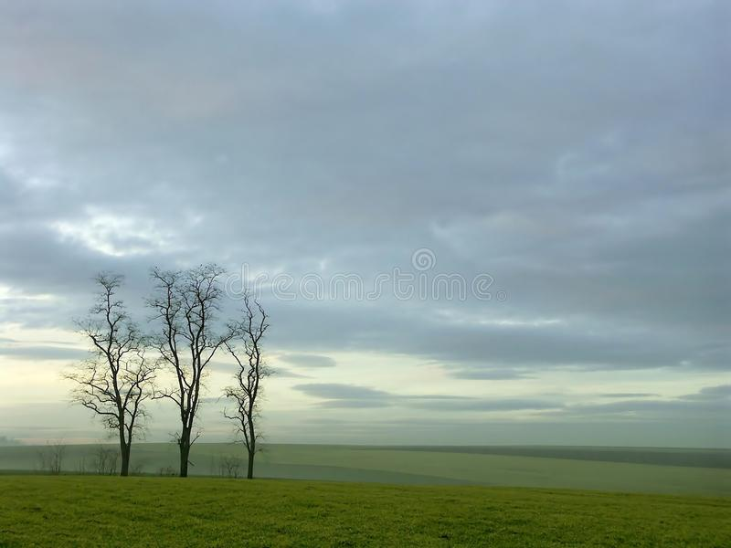 Night scene with trees after sunset royalty free stock photos