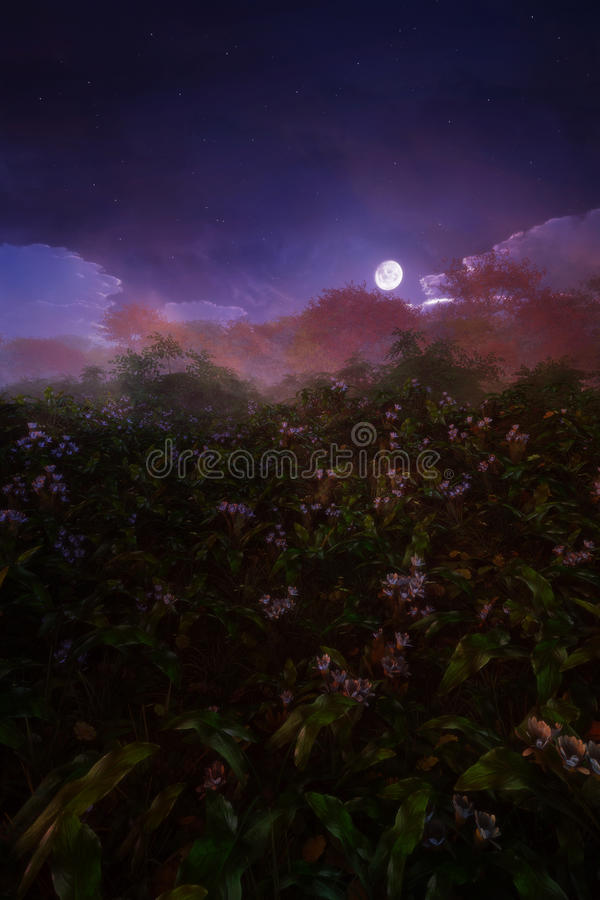 Download Night Scenery stock illustration. Image of landscape - 26968979