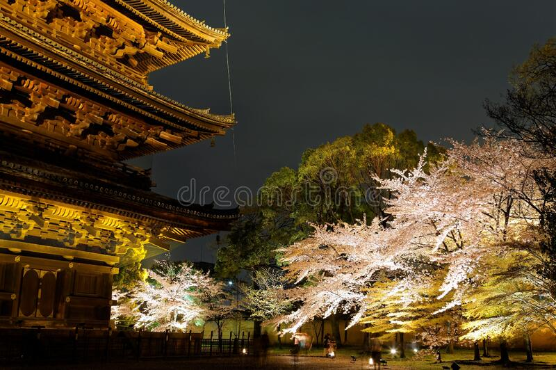Night scenery of the famous Five-Story Pagoda in Toji Buddhist Temple in Kyoto Japan. With view of majestic wooden eaves and beautiful cherry blossom trees royalty free stock photography