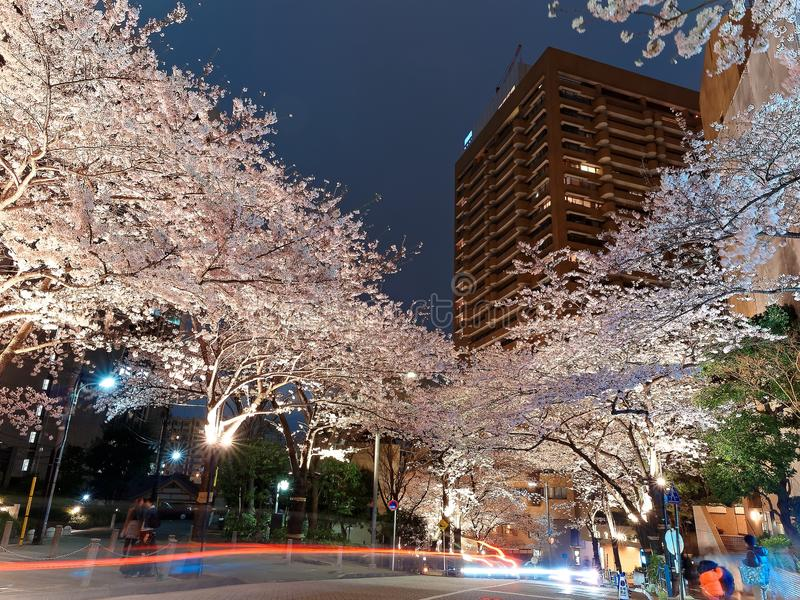 Night scenery of Roppongi Ark Hills in Tokyo downtown during Sakura Matsuri Festival stock photo