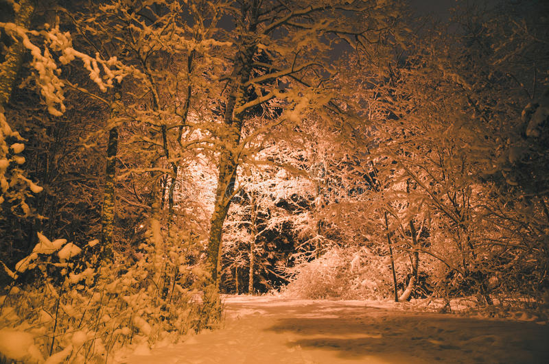 Night shot of winter-time forest after snowbound stock images