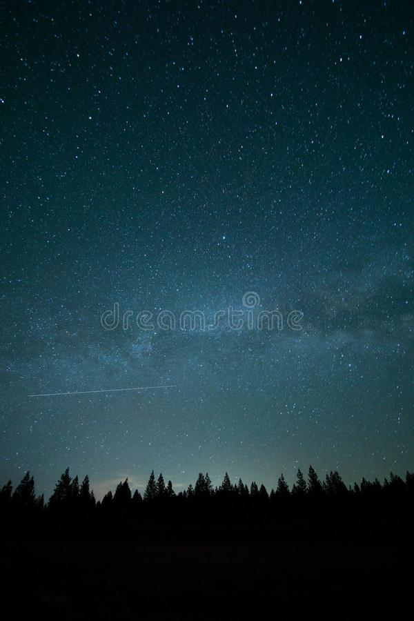Night Skies Over Tree Tops Free Public Domain Cc0 Image