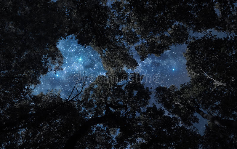 Night sky above treetops stock images