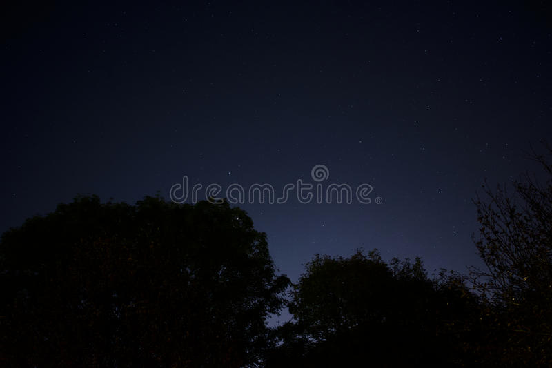 Night sky with city light glow over the silhouette trees stock image