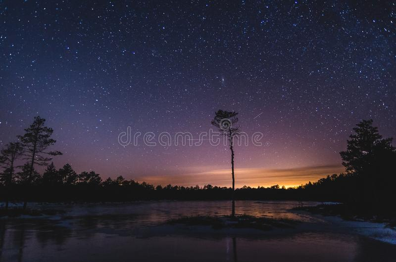 Night sky and city lights over small pine tree stock photos