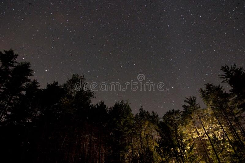Night Sky In Forest Free Public Domain Cc0 Image