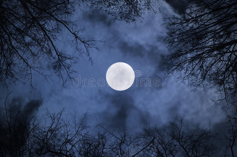 Download Night Sky Gothic Landscape With Full Moon Beneath The Clouds And Silhouettes Of The Bare Trees Stock Photo - Image of desolate, blue: 77878666