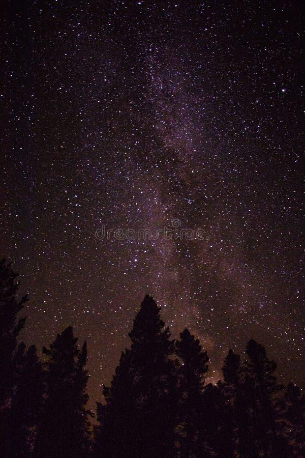 Night sky while kayak camping in Quebec.  royalty free stock photos