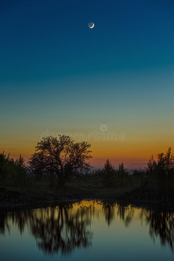 Night sky with the moon after sunset. Landscape with a tree by the lake.  royalty free stock photography
