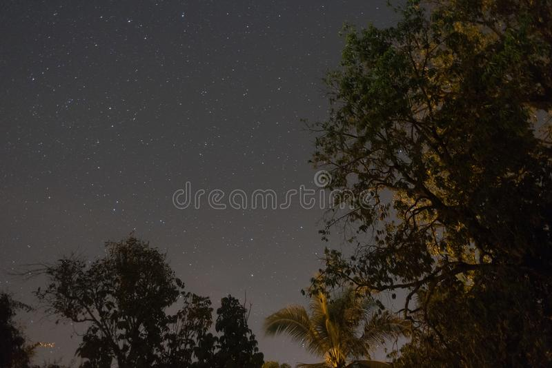 Night sky with star and trees as foreground. High iso image royalty free stock images