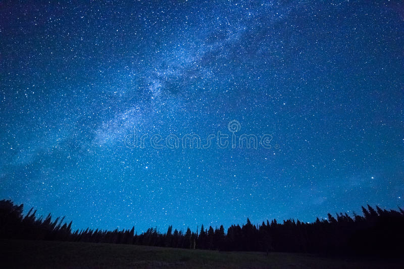 Night sky with stars above field of trees. royalty free stock photos