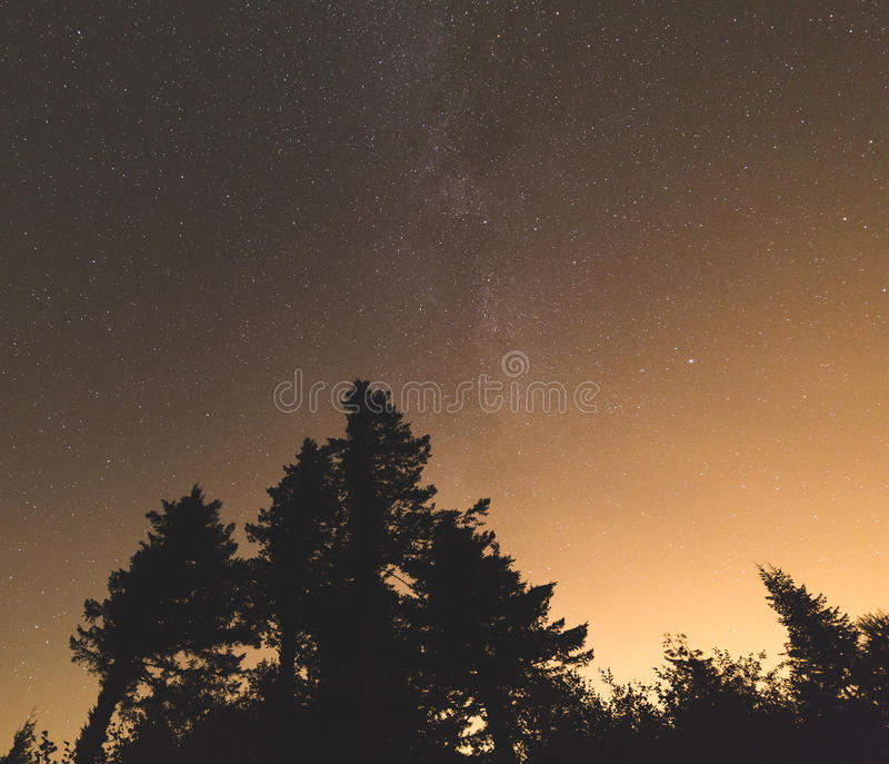 Night sky with stars above forest trees silhouette stock images