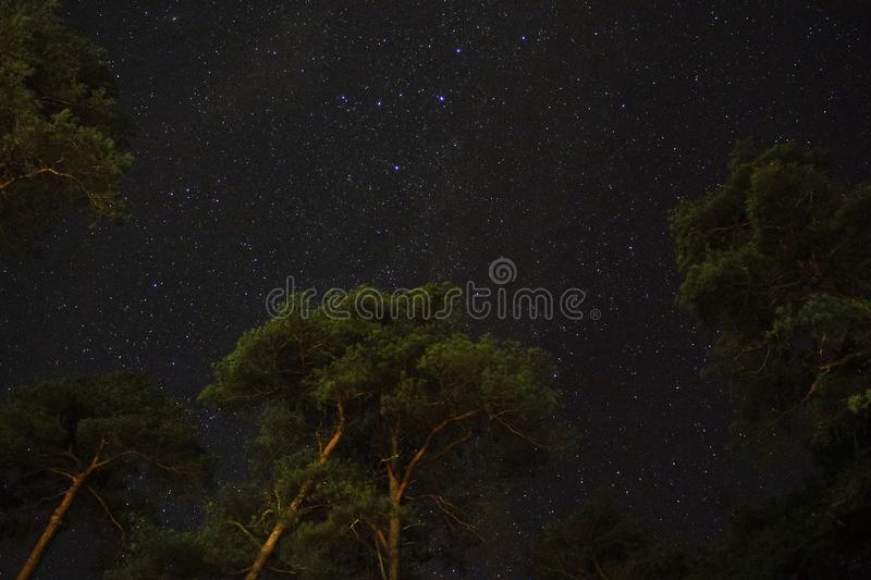 Night sky stars Cassiopeia constellation over forest royalty free stock image