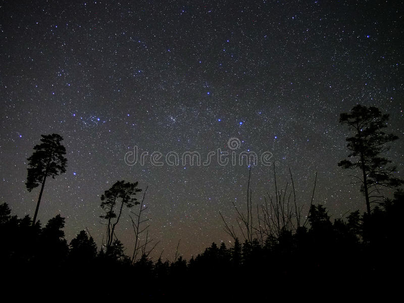Universe stars night sky forest perseus cassiopeia constellation stock photos