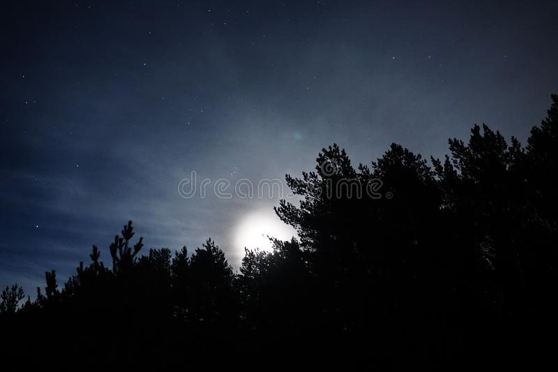 Moon light stars and blue clouds over night forest royalty free stock image
