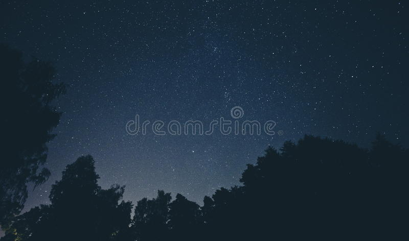 Night Sky And Tree Silhouettes Free Public Domain Cc0 Image
