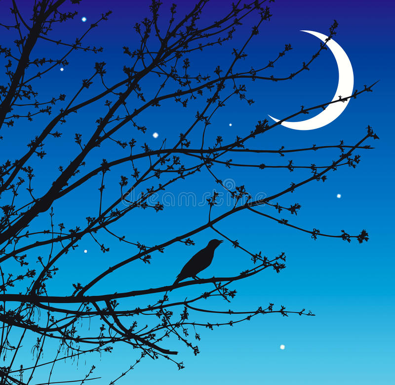 Night song of the nightingale stock illustration