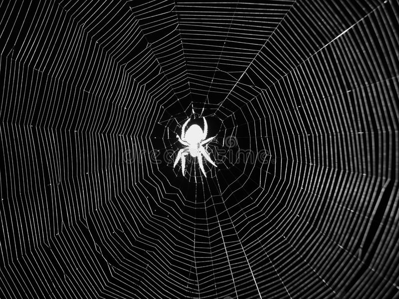 Night spider in center of web black-and-white image stock photo