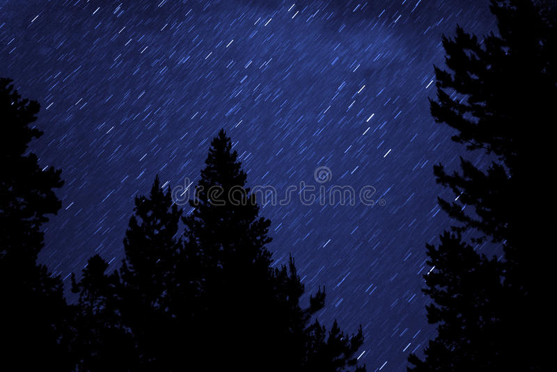 Night Stars Silhouette Trees royalty free stock photo