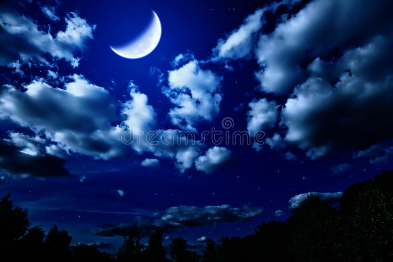 Download Night Summer Forest With And Moon Stock Image - Image: 18387987