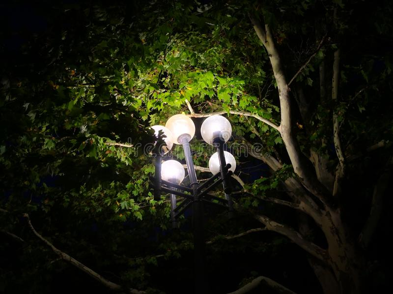 Night time lantern in the park trees royalty free stock image