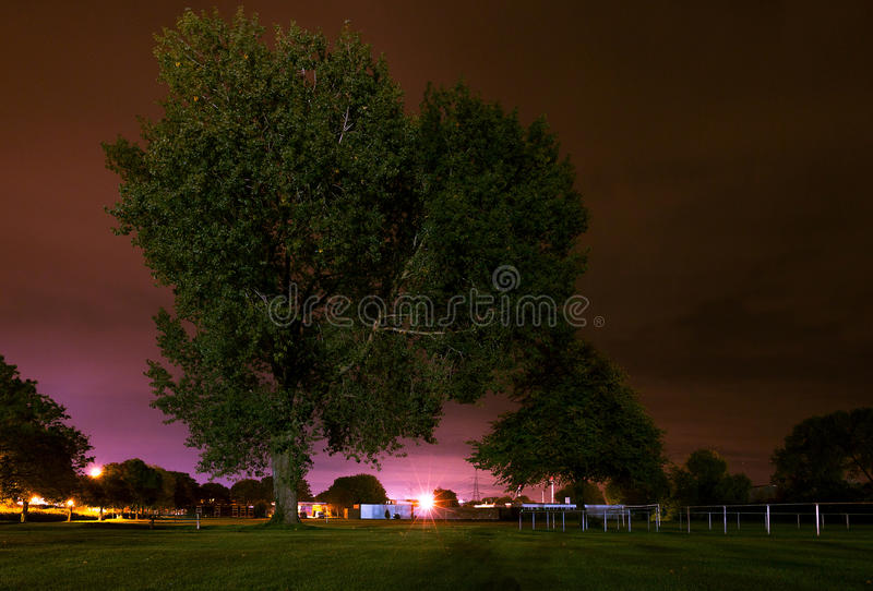 Night Tree. Tree set in a park with the night sky coloured with the urban glow of street lamps and industrial lights casting shadows in the foregroundNight Tree royalty free stock images