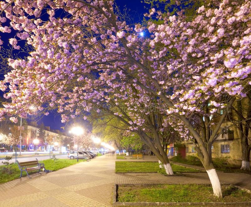 Download Night Urban View With Japanese Cherry Blossom Stock Images - Image: 16361484