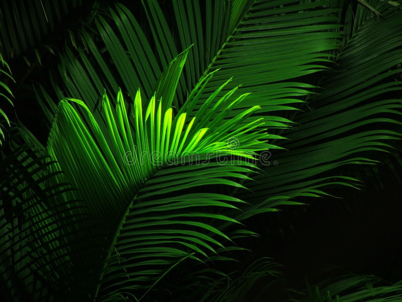 Night view of palm tree. Light effect on palm tree at night royalty free stock photography