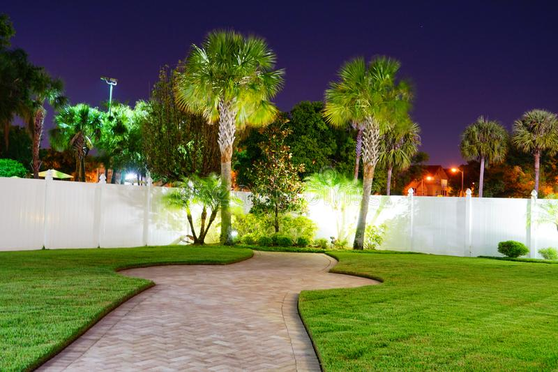 Night view of palm trees royalty free stock image