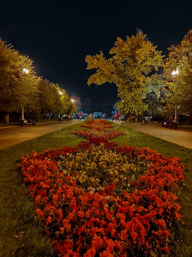Night view park with flower royalty free stock photo