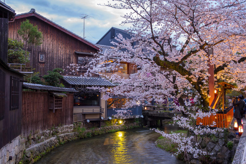 Night view of Shirakawa River in Gion. District with cherry blosson royalty free stock photos