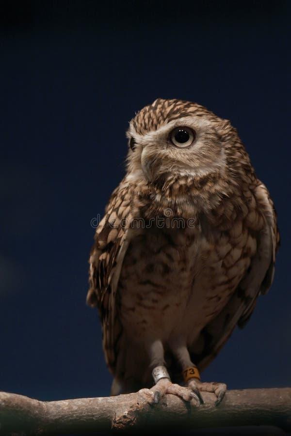 Download Night Watcher stock photo. Image of beak, branch, wildlife - 5057066