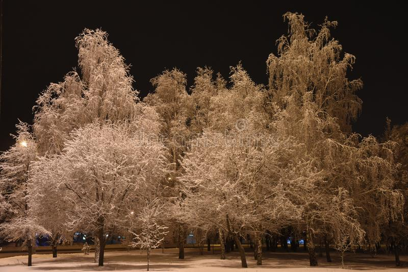 Night, winter, cityscape.Trees in the snow. royalty free stock photography