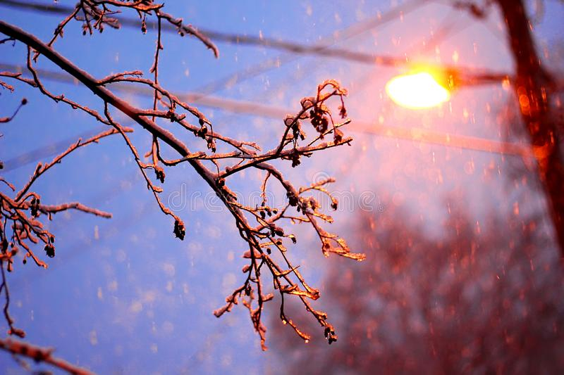 Night Winter Street Lamp With Falling Snow stock photography