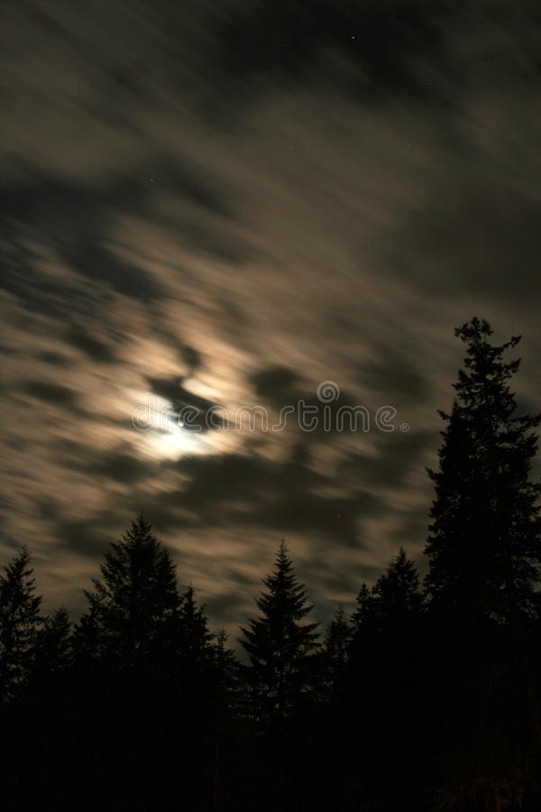 Night in the woods. Moonshine through the clouds during a night in the woods royalty free stock photo