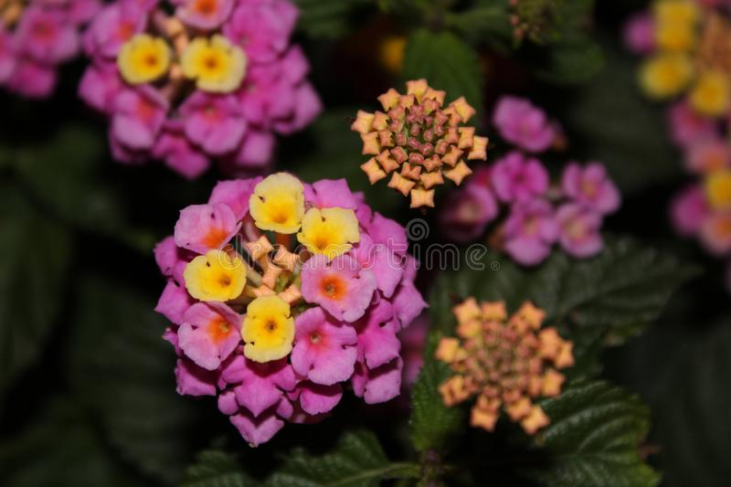 Small flowers royalty free stock images