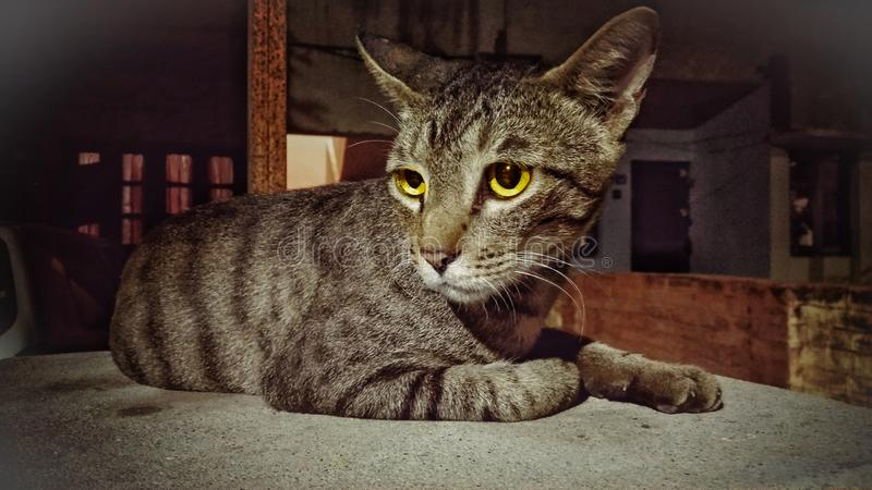 Nights Watch. Cats, kittens, alert stock photo