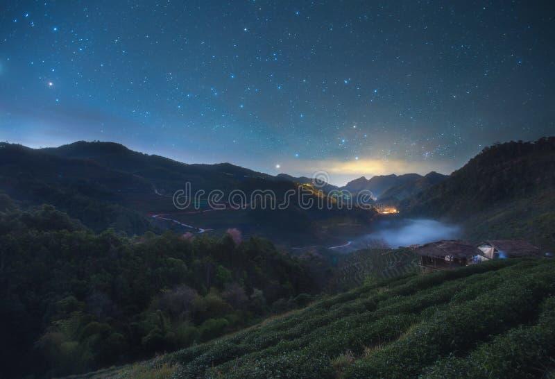 Nightscape à la plantation de thé dans le Doi Ang Khang, Chiang Mai chez la Thaïlande photographie stock libre de droits