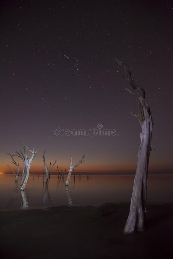 nightscape стоковые фотографии rf