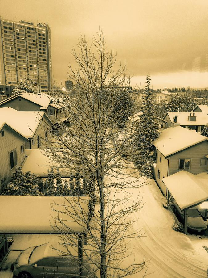 Nighttime зимы стоковые фотографии rf